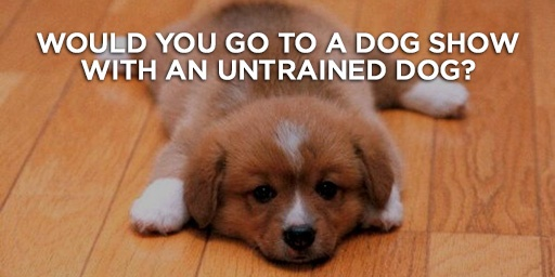 Would you go to a dog show with an untrained dog?