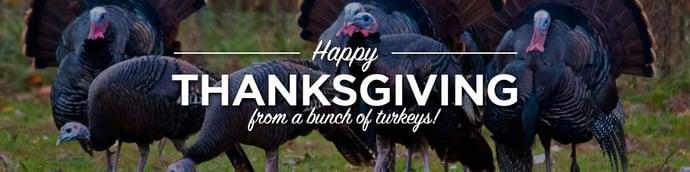 bunch-of-turkeys.jpg